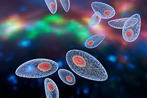 sintomas del toxoplasmosis alto